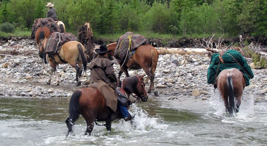 Pack horse clinician Ron McKenzie moves pack horses upstream near Nordegg Alberta Canada
